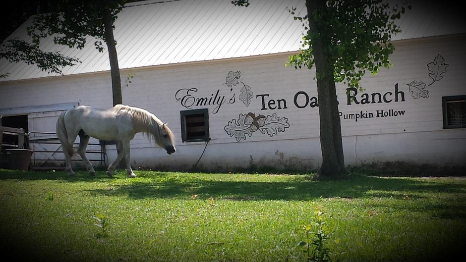 Reception Location in Madison - Emily's Ten Oaks Ranch