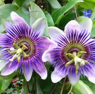 Florists in Lake Wales - HAPPY FLOWERS