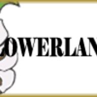 Florists in Cumberland - FLOWERLAND