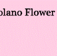 Florists in Berkeley - Solano Flower Shop