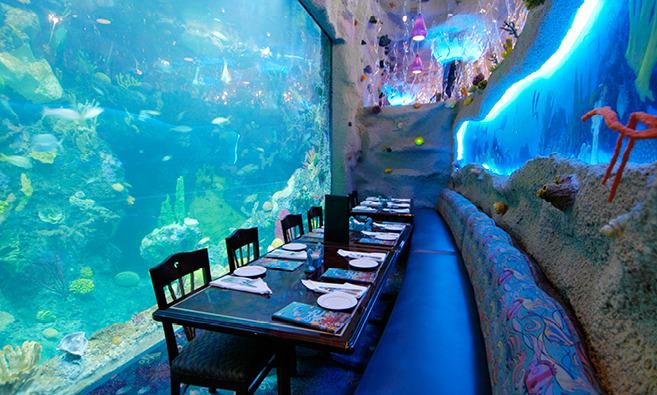 Aquarium Restaurant Denver Best Wedding Reception