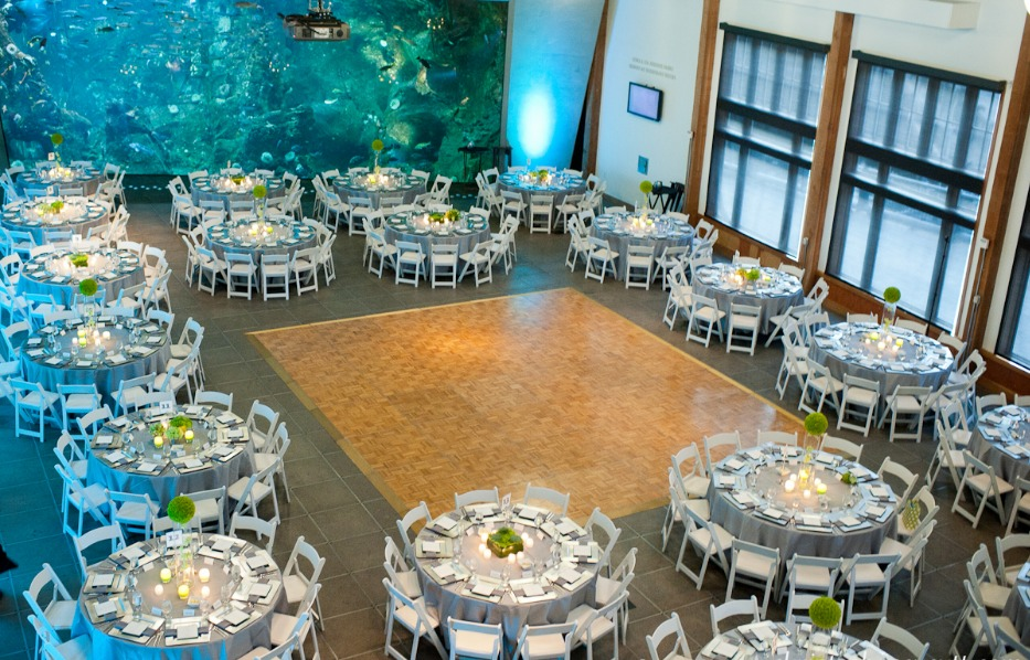 Seattle Aquarium Best Wedding Reception Location Venue In Seattle